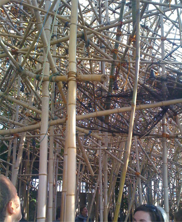 Tangle of bamboo